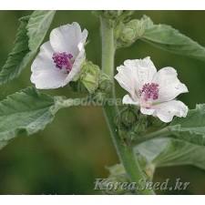 마쉬말로우 (Marshmallow) 0.01g(약10개)